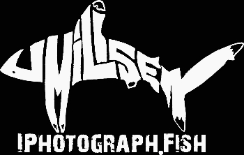 Iphotograph.fish